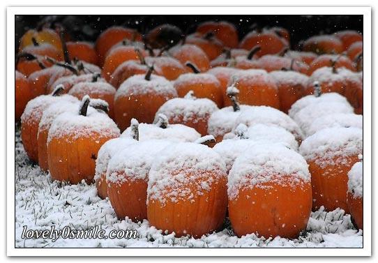 صور حول العالم لشهر أكتوبر (2)