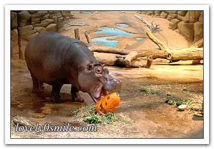 صور حول العالم لشهر أكتوبر (3)