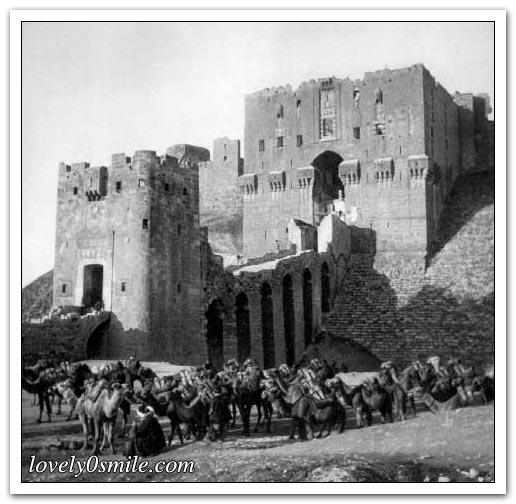 يالقرب من قلعة حلب