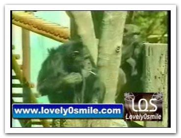 الببغاء يقراء وقرد يدخن - فيديو
