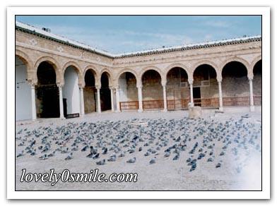 جامع الزيتونة i-zitonh-06.jpg