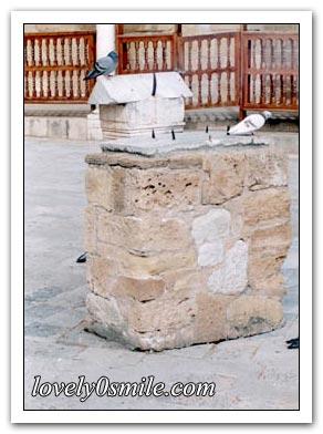 جامع الزيتونة I-zitonh-18