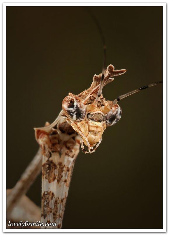 صور عالية الدقة لبعض الحشرات ج1