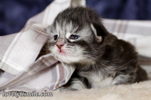 صور قطط صغيرة اجمل صور القطط الصغيرة