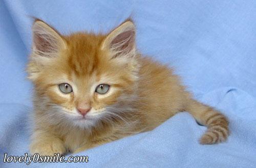 صور قطط روووعة m-157.jpg