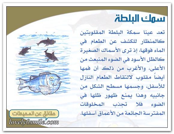 معلومات عجيبة عن عالم البحار Oc-09-08