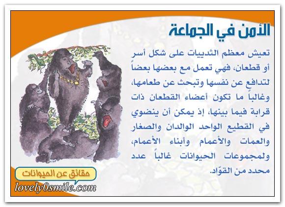 الأسد والقطعان