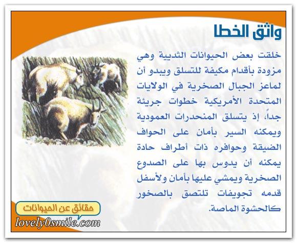 الحيوانات المتسلقة