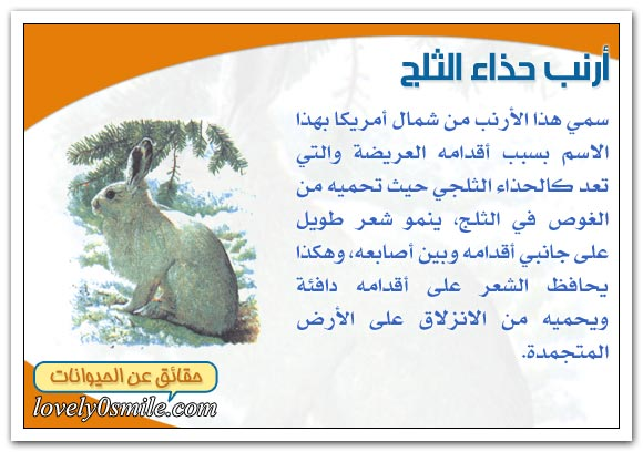 ثدييات المناطق الباردة