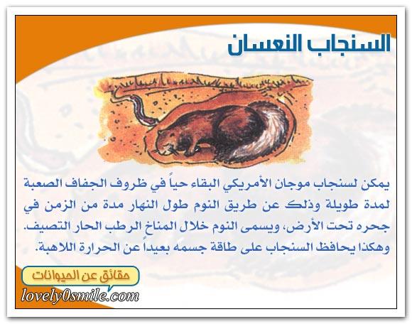 ثدييات الصحراء