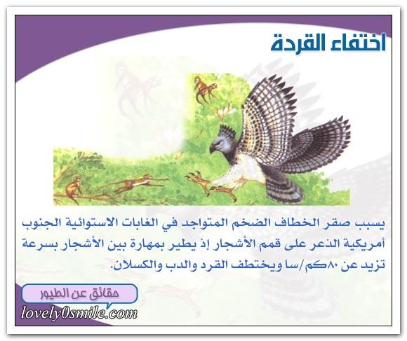 الطيور المفترسة