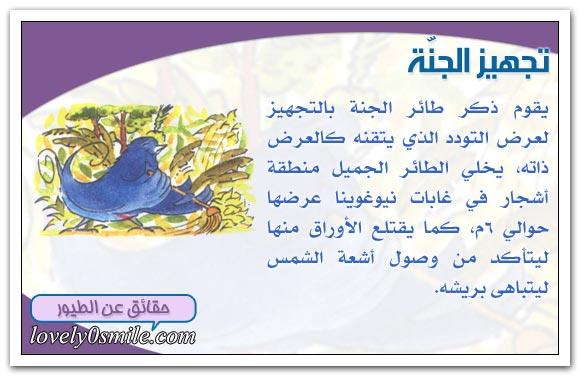 طيور الغابة الاستوائية