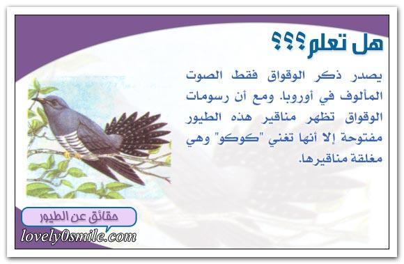 أصوات الطيور