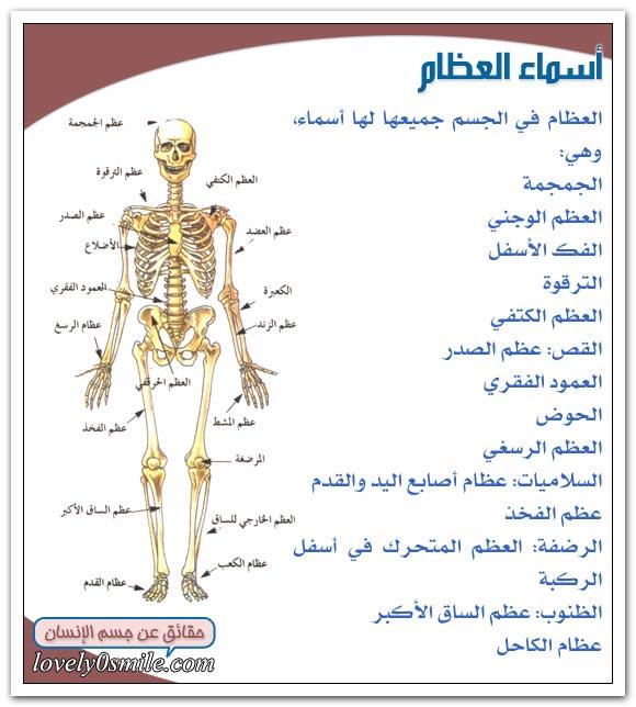 حقائق مدهشة عن جسم الانسان hu-02-09.jpg