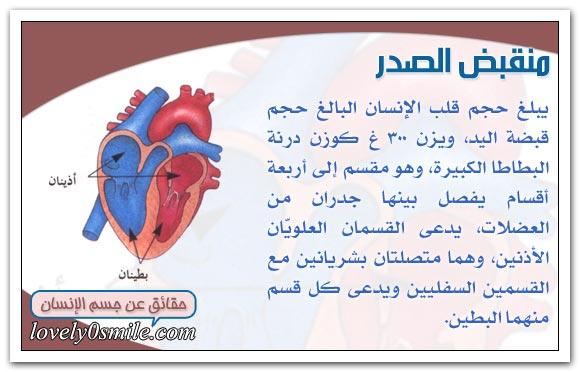 معلومات على قلبك hu-04-01.jpg