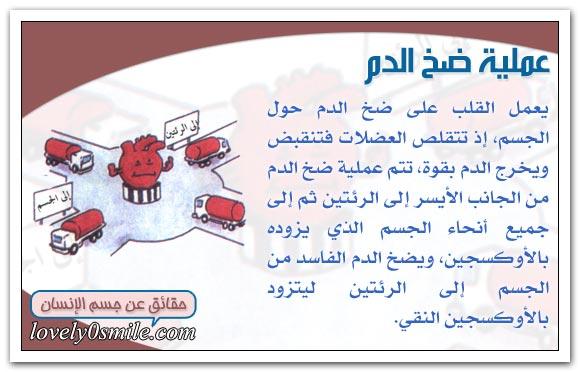 معلومات على قلبك hu-04-03.jpg
