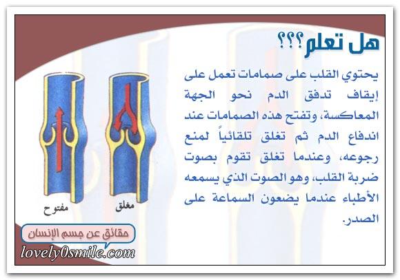 معلومات على قلبك hu-04-06.jpg