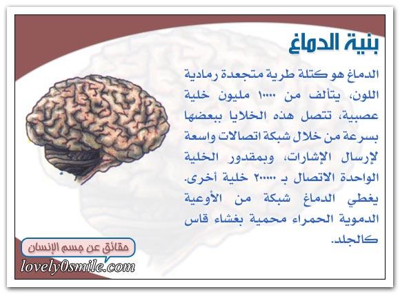 وظيفة الدماغ