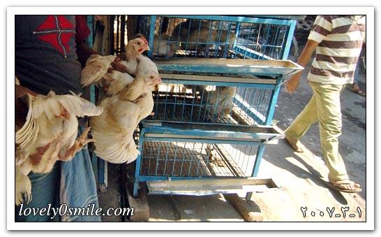 العالم اليوم 1-4-2007 / صور