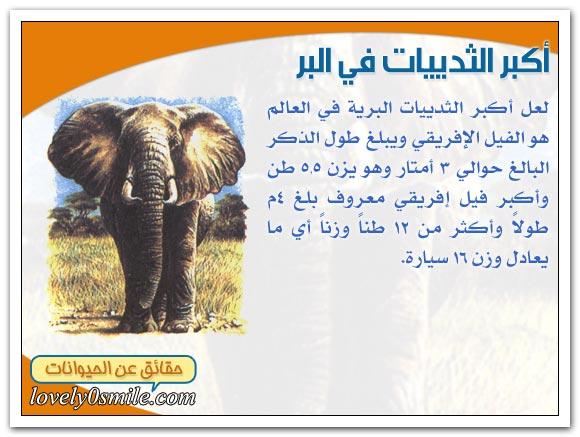 أكبر الحيوانات الثديية