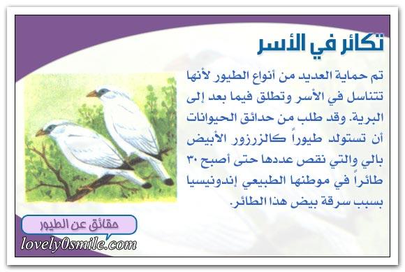 طيور في خطر