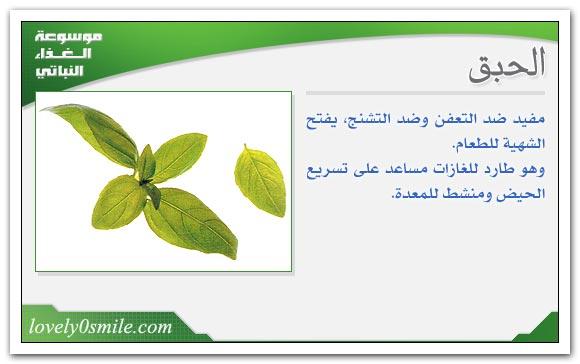 فوائد الحبق الشاي والنعناع المجفف
