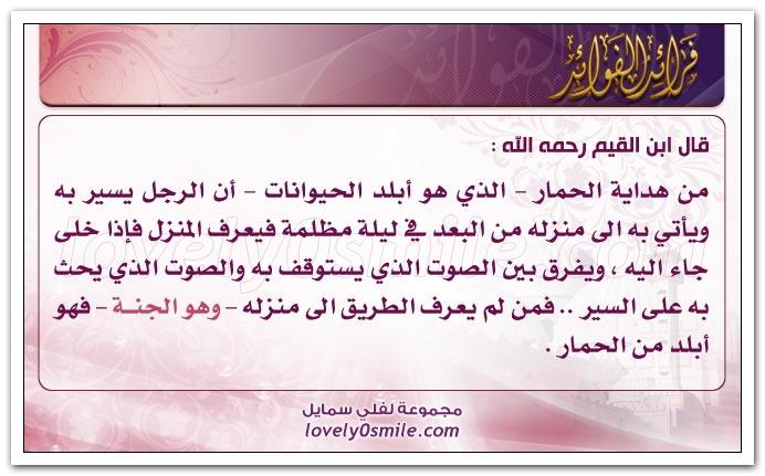 السعادة الشقاوة fraed-014.jpg