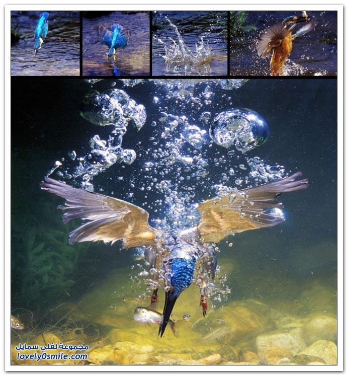 صور منوعة 111
