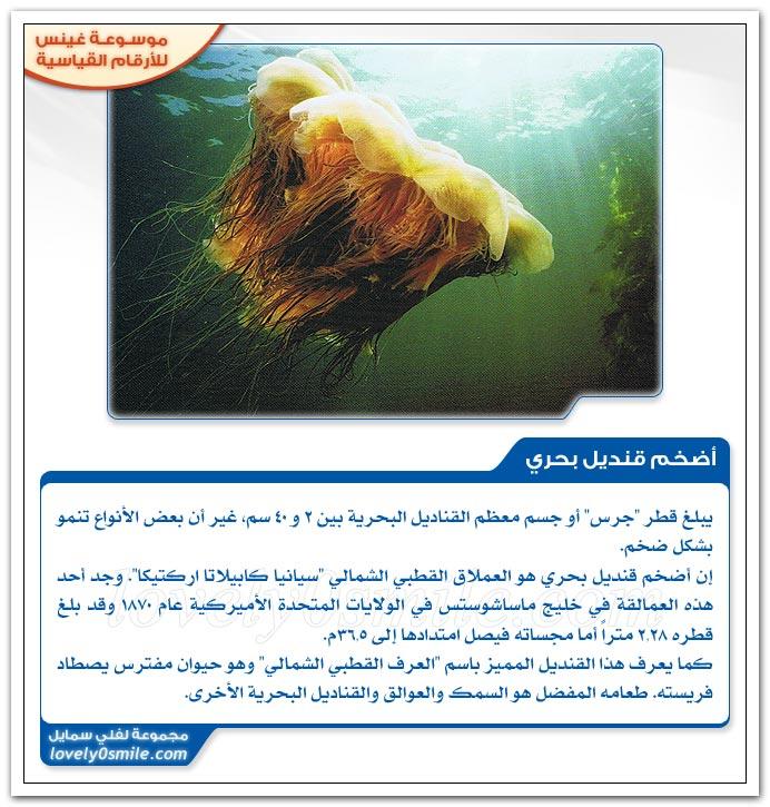 أضخم قنديل بحري + أطول حيوان