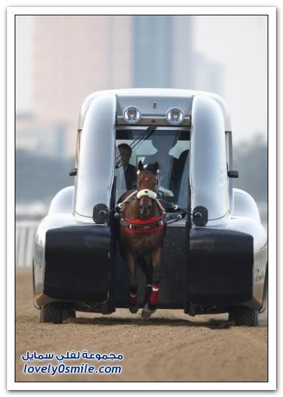 صور العش الآمن + سيارة الحصان