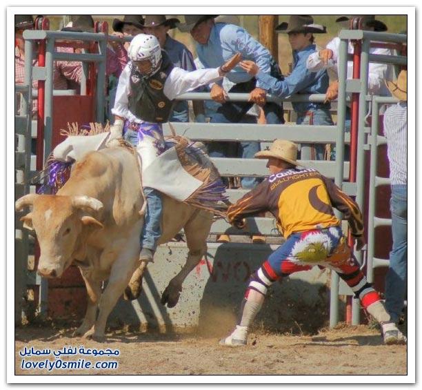 صور مسابقات رعاة البقر