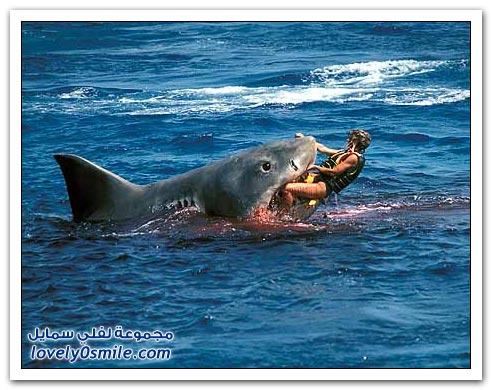 سمك قرش يلتهم رجل - صور