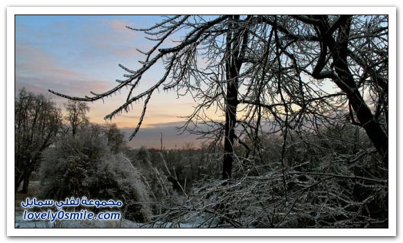 صور الأشجار المجمدة من الثلج
