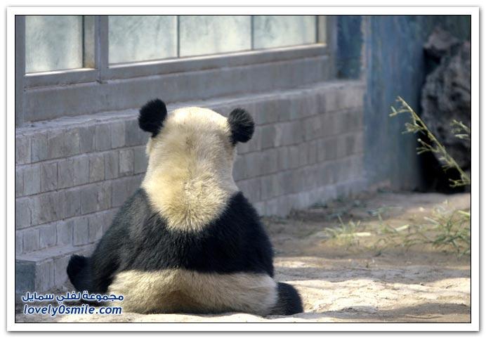 صور مواليد جدد من حدائق الحيوان حول العالم