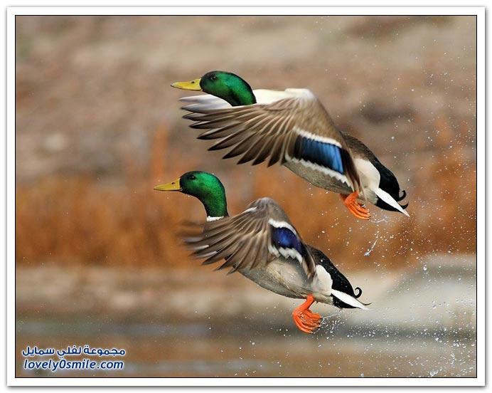 صور طيور من جميع الأنواع ج1