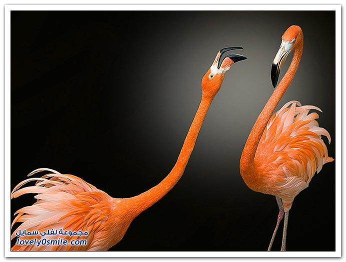 صور طيور من جميع الأنواع ج2