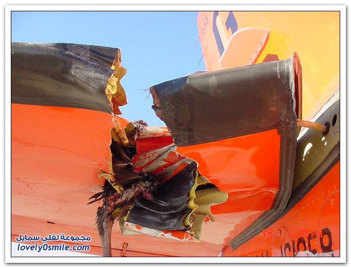 صور حوادث طيور مع طائرات