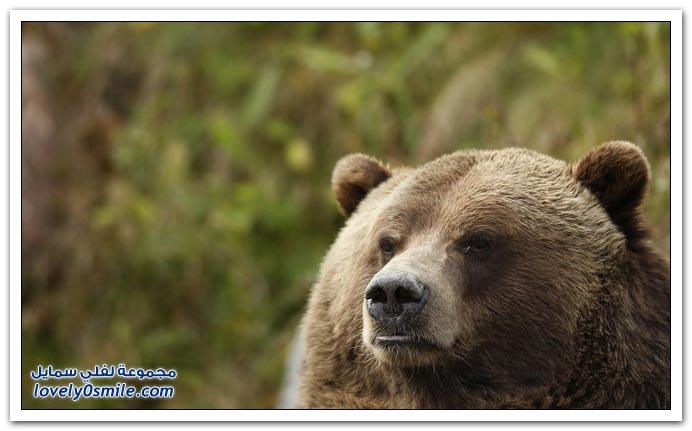 صور حيوانات حول العالم