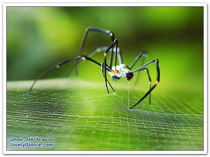 صور عالية الدقة لبعض الحشرات ج2
