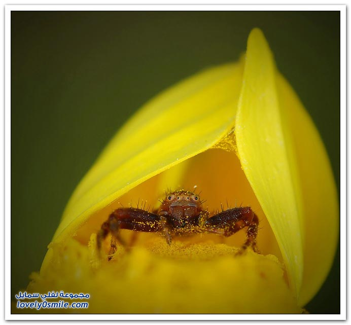 صور عالية الدقة لبعض الحشرات ج3