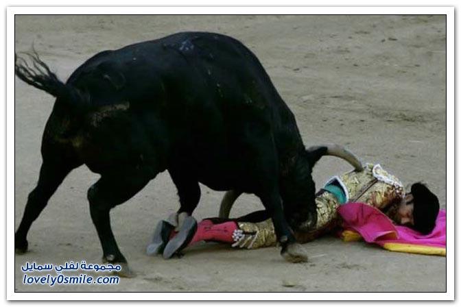 صور مصارعة الثيران في أسبانيا