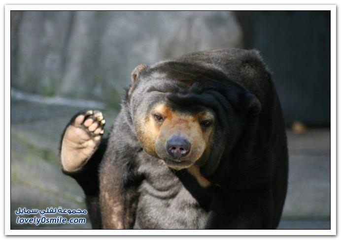 صور أنواع الدببة حول العالم ج1