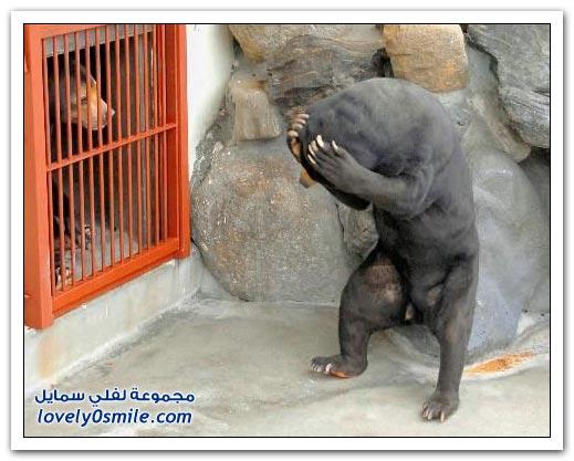 صور أنواع الدببة حول العالم ج2