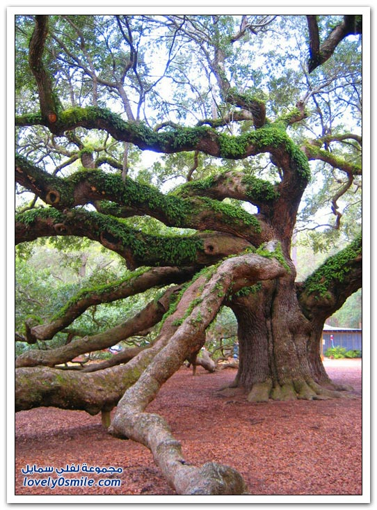 اغرب الاشجار في العالم سبحان الله Trees-04