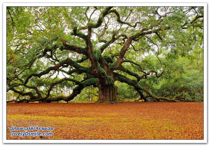 اغرب الاشجار في العالم سبحان الله Trees-06
