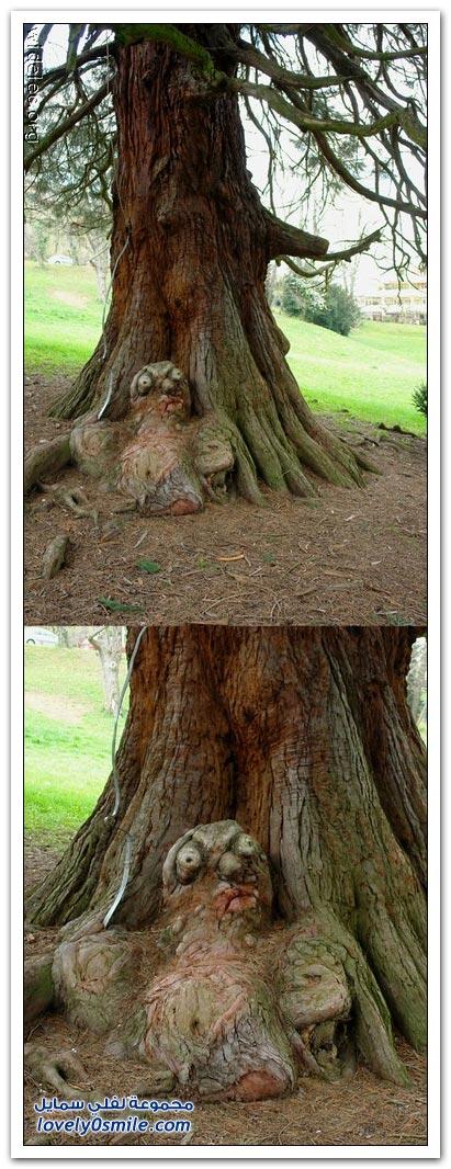 اغرب الاشجار في العالم سبحان الله Trees-08