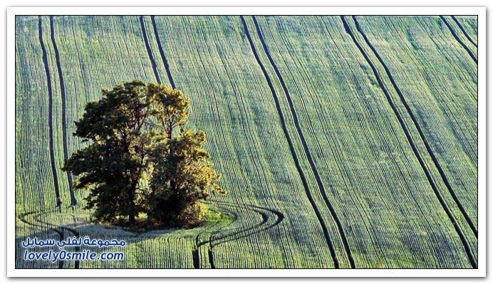 اغرب الاشجار في العالم سبحان الله Trees-12