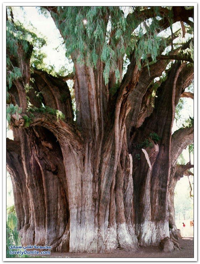 اغرب الاشجار في العالم سبحان الله Trees-16