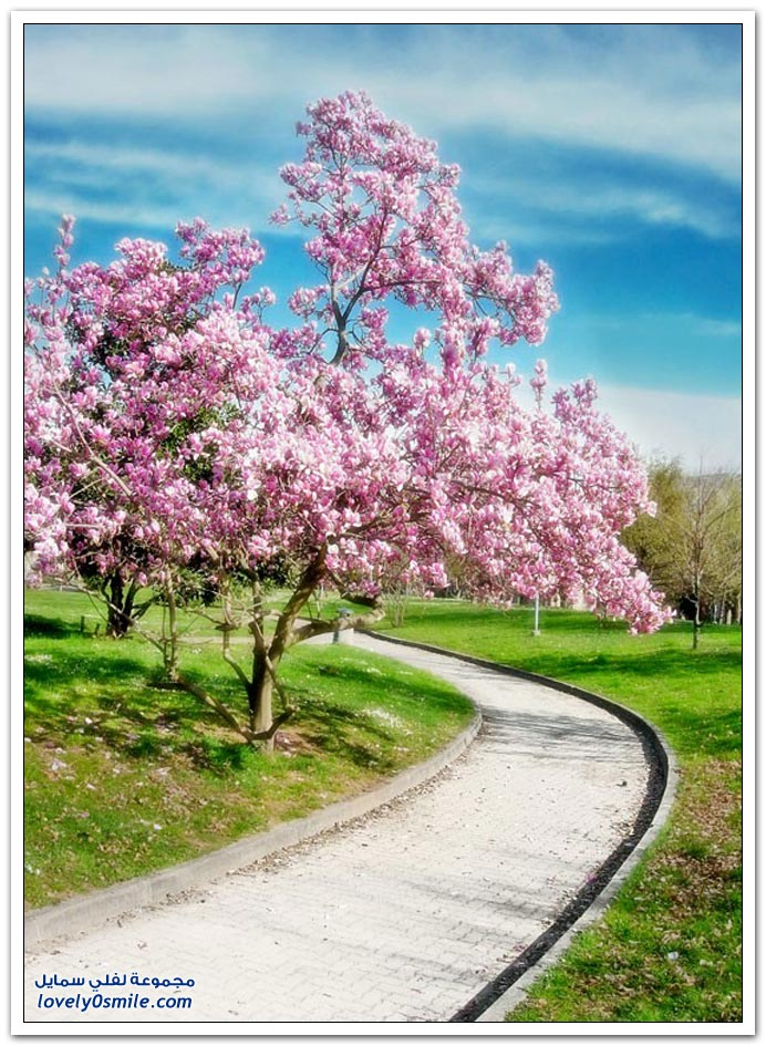 اغرب الاشجار في العالم سبحان الله Trees-18
