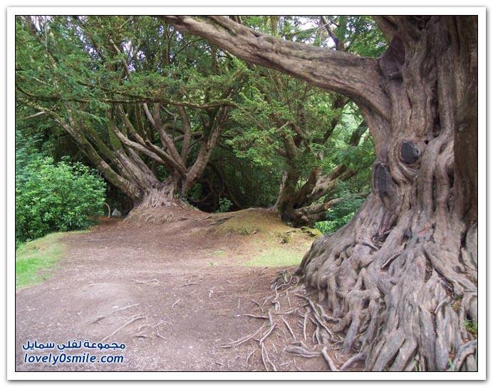 اغرب الاشجار في العالم سبحان الله Trees-20